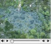 白川水源動画映像